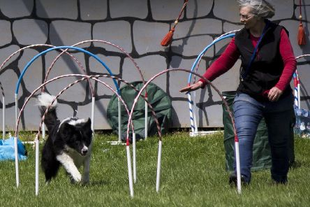Canine fun at the heavy horse centre EMN-190517-161433001