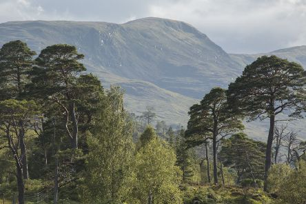 The North-east is one of the areas for which Observatree has a shortage of volunteer surveyors. The dealine for applications is the end of March.