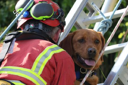 The dog was rescued this afternoon. Pic by Allen Craig.