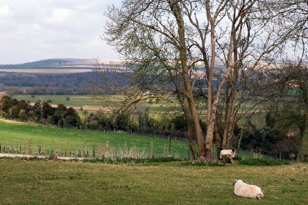 Downland viewed from near South Stoke. Picture: Malcolm McCluskey G13449H9