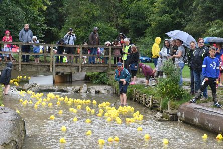 Louth Duck Race hosted by Louth Lions.