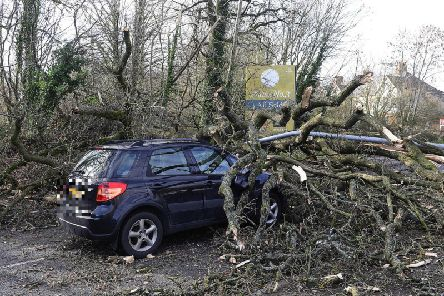 A tree is brought down on top of a car in Belfast during Storm Erik in February. (Photo: Pacemaker)