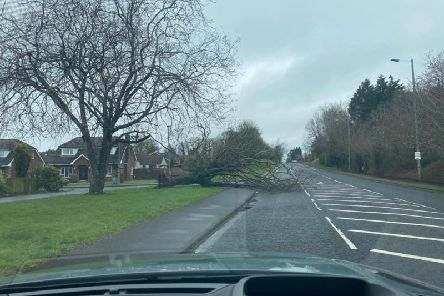 Tree blocking part of Lurgan road