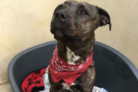 Anyone have a home for Sky?