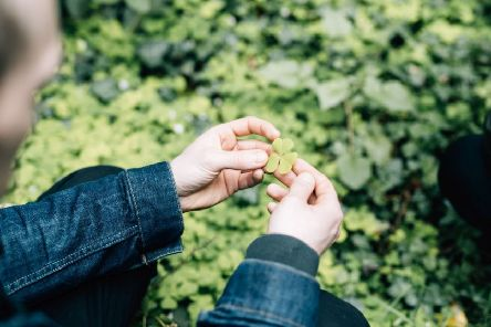 If you're a lover of fresh, seasonal produce, don't miss the special Foraging Dinner at Bert's Jazz Bar next Wednesday night