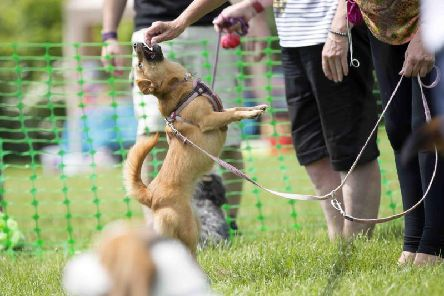 Every dog can have their day on Becket's Park this June.
