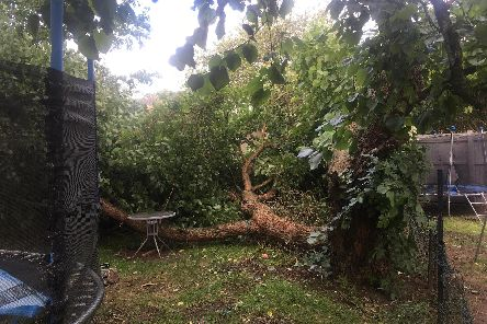 The collapsed tree in Toni Davis' garden after it had been moved off of the trampoline