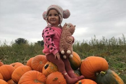 Adrian's granddaughter Bunny has been helping out in the pumpkin field