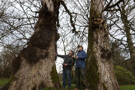 Shipwright Dominic Mills (left), alongside Timber sawmill specialist Will Bullough, carries out an assessment of elm trees on the Haddo Estate in Aberdeenshire. Picture: Andrew Milligan/PA Wire