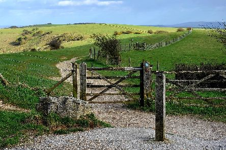 The South Downs. Pic Steve Robards SR1906957