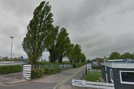 The row of Lombardy poplar trees in Furze Lane. Picture: Google Maps
