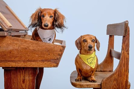 Amber and Margot ready for East Hants Dachshunds' back to school themed sports day. Picture: Top Dog Photography