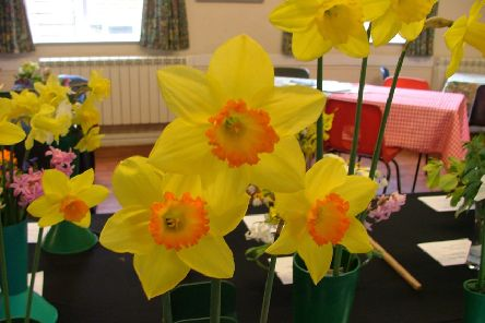 Crowhurst and District Horticultural Society Spring Flower Show 2019 SUS-190320-104522001