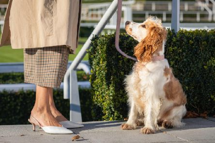 Goodwoof is looking for perfect partnerships between dog and owner (Credit: Chris Ison/Goodwoof)