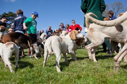 The Irish Game Fair & Fine Food Festival will be back at Shanes Castle, Antrim, on June 28 and 29.
