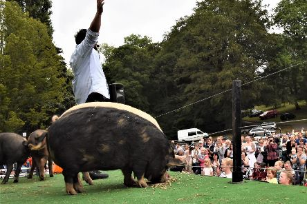 Tom Hogg presents The Hogg Show at Kenilworth Show on June 8. Photo supplied.