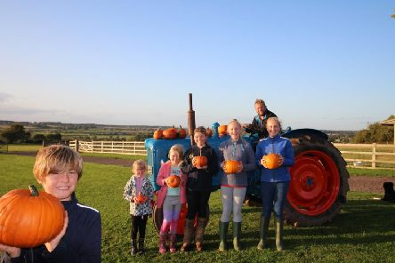 William Mew and other members of the Ellis family get set to harvest the'bumper pumpkin crop at Hilltop Farm (pictured back left to right are: Tilly Ellis, Beatrice Ellis, Esmee Ellis, Evie Constable, Alice Constable and Ed Ellis).