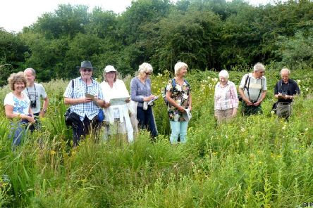 Members of Ferring Conservation Group taking part in the annual Big Butterfly Count. Picture: Tricia Hall