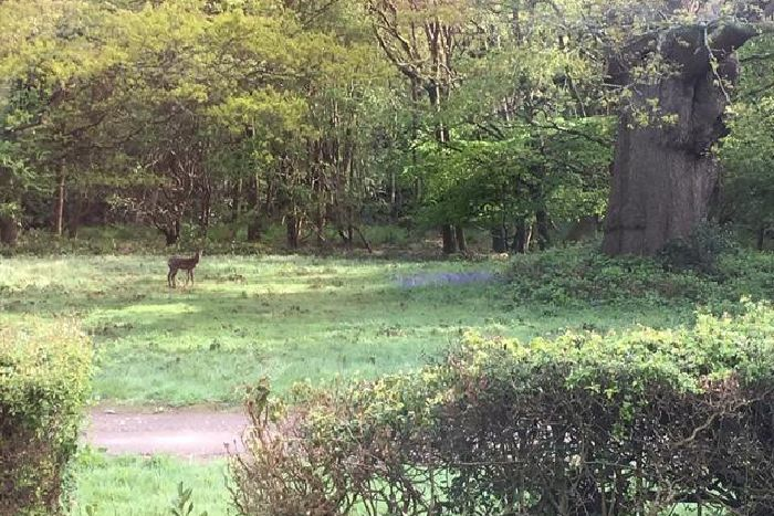 Woodland near Ifield where The Ifield Society wants a nature reserve to be created