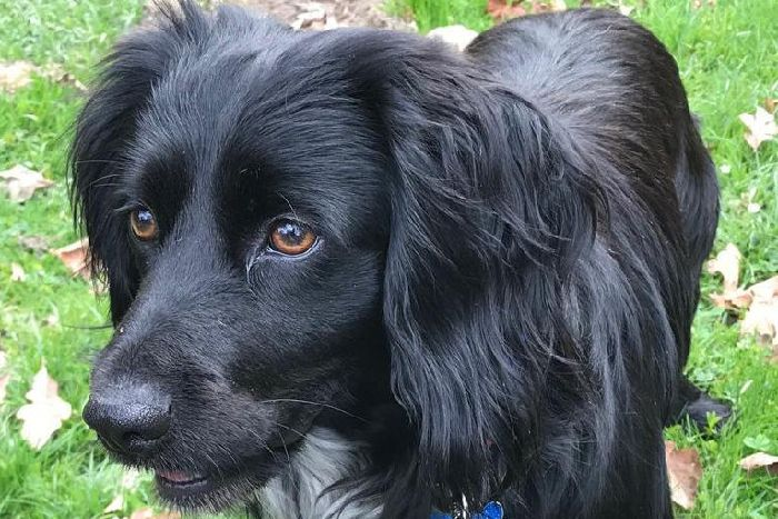 Worthing dog lovers praised for help in three-day search for Derek