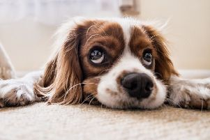 Vets have issued a warning to pet owners who are planning to hold a Bank Holiday barbecue.
