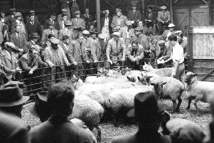 Banbury Sheep auction, Look Back with Little NNL-180917-105626001
