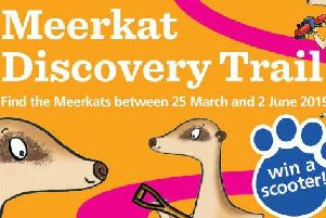 The Meerkat Trail