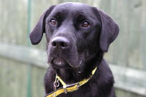 Dogs Trust Shoreham dog of the week Buddy