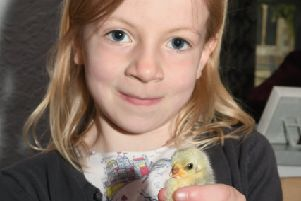 Family fun day at Rippingale church and pub. Emma Langdon 7 holding a chick. EMN-190513-095453001