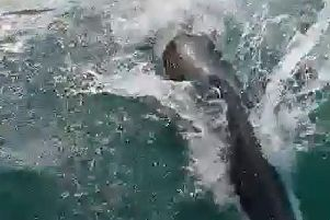 One of the dolphins spotted off Brighton coast on Tuesday evening (June 25). Picture: Shoreham Port