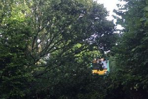 The fallen tree on the tracks. Picture courtesy of Southern Rail SUS-190817-090851001