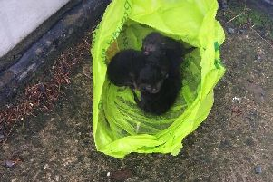 The kittens abandoned in the wind and rain