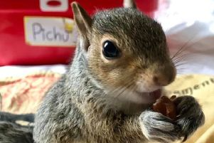 Squirrel Rescue SUS-190919-073732001