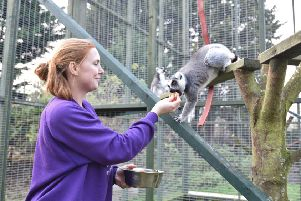 Exotic Pet Refuge open day this weejend