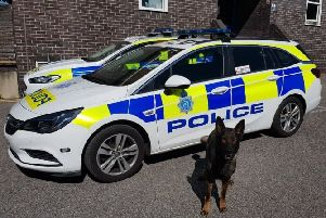 Police Dog Goose - he tracked down a drink-driver along a mile-long route SUS-190517-150202001