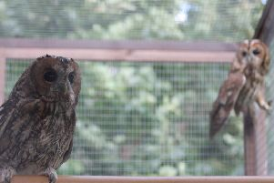 The owls have been named Tinnie and Woodieby Tinwood guests