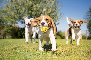 Stock image of dogs