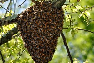 Library image of a bee swarm
