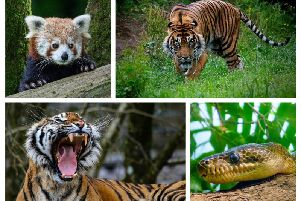 Zoo-m photographic competition