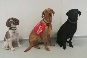 Three of the Medical Detection Dogs involved in the trial - Lizzie, Flint and Oakley