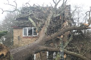 Oak tree falls onto Crawley home. WSCC