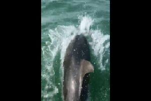 A screen shot of one of the dolphins
