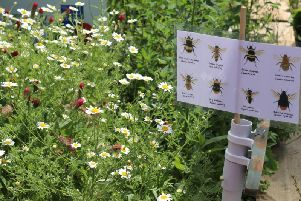 Pollinator-friendly plants