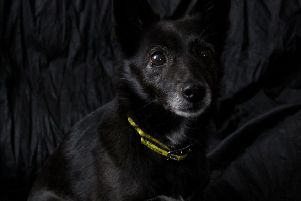 Dogs Trust Ballymena are celebrating their canine residents with black coats.... Here's Poppy!