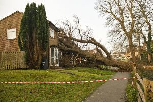 The large oak tree fell into two properties in Haywards Heath. Photo by Eddie Howland