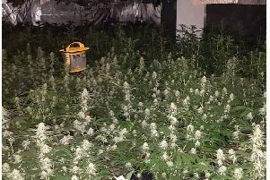 Detectives have launched an investigation following the discovery of a cannabis factory in Crawley
