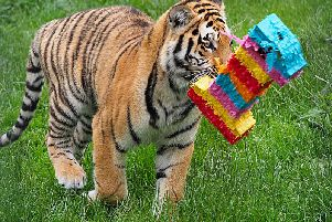 The cubs are celebrating their first birthday