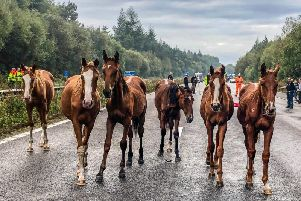 Horses on the loose on the M23 near Crawley have caused major delays. Picture: Sussex Roads Police