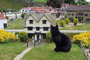 Rooney, the resident cat at Southsea Model Village. Picture: Supplied