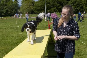 POOCH IN THE PARK!. . . .Jessica Nicholl back in 2016 puts 'Charlie' her Cavalier King Charles through his paces during the Pooch in the Park event.